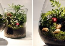 Two-small-glass-terrariums-217x155