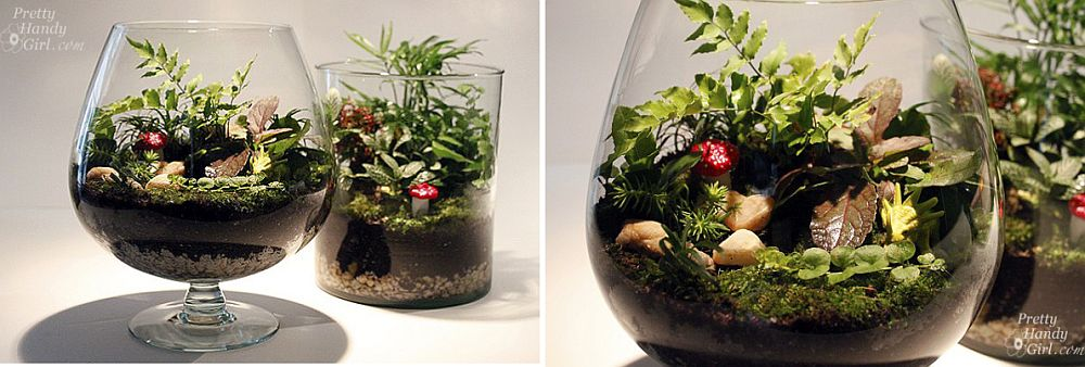 Two small glass terrariums