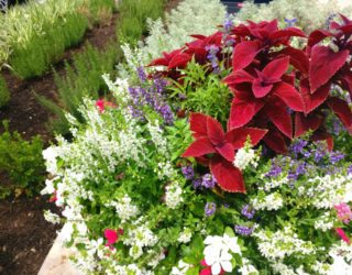 Gardening Tips for Creating a Modern Landscape