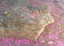 Crape myrtle blossoms surround a large rock 217x155 Gardening Tips for Creating a Modern Landscape