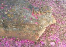 Crape-myrtle-blossoms-surround-a-large-rock-217x155