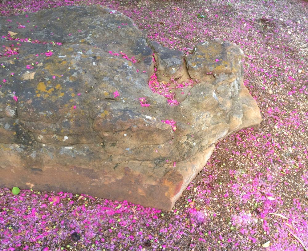 Crape myrtle blossoms surround a large rock