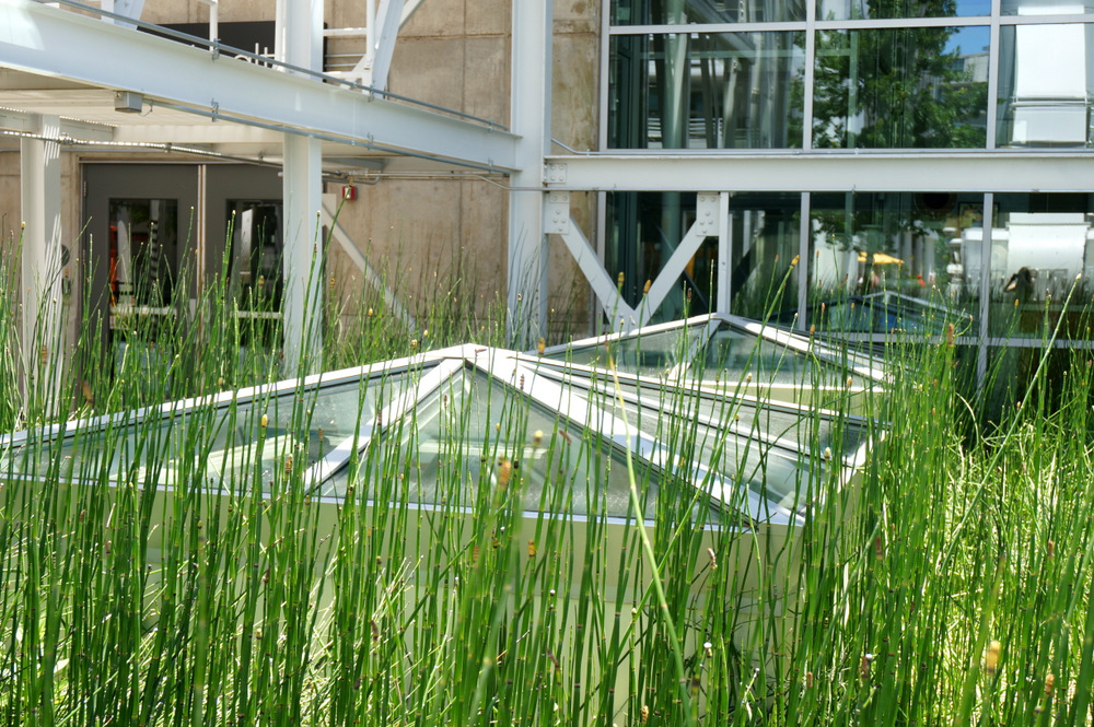 Horsetail reedsand greenhouse-style windows