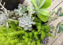 Mix-succulents-in-a-planter-217x155