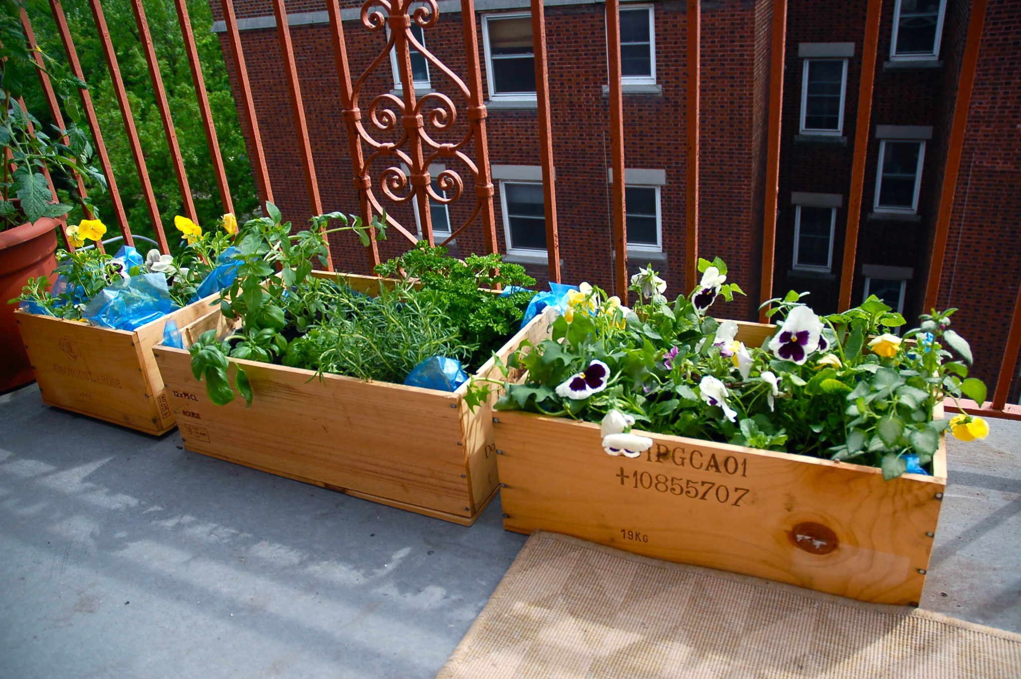 A blooming green balcony garden created with wooden planter box