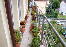 A-long-and-narrow-balcony-garden--217x155