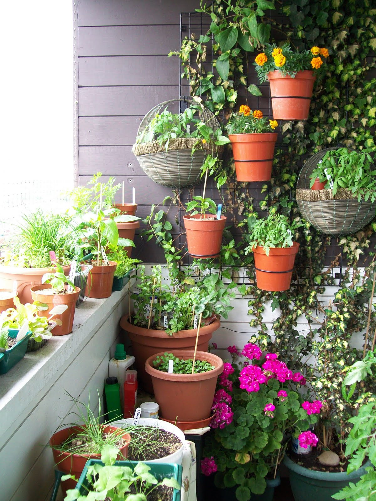 Balcony garden that makes use of the vertical space
