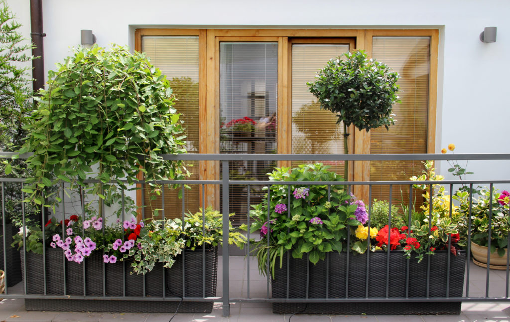 Balcony garden that radiates elegance and symmetry