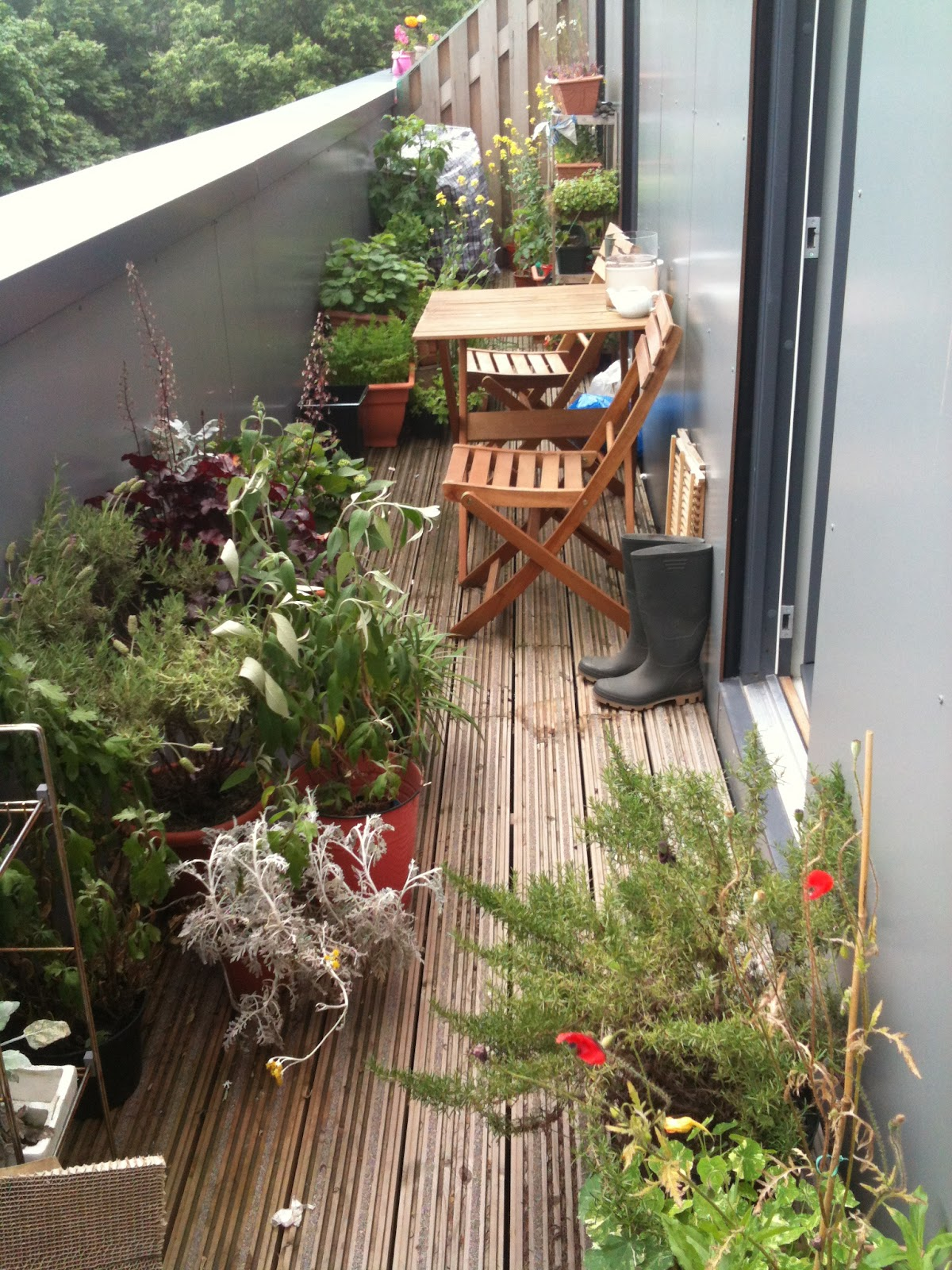 Narrow balcony garden channeling the backyard view