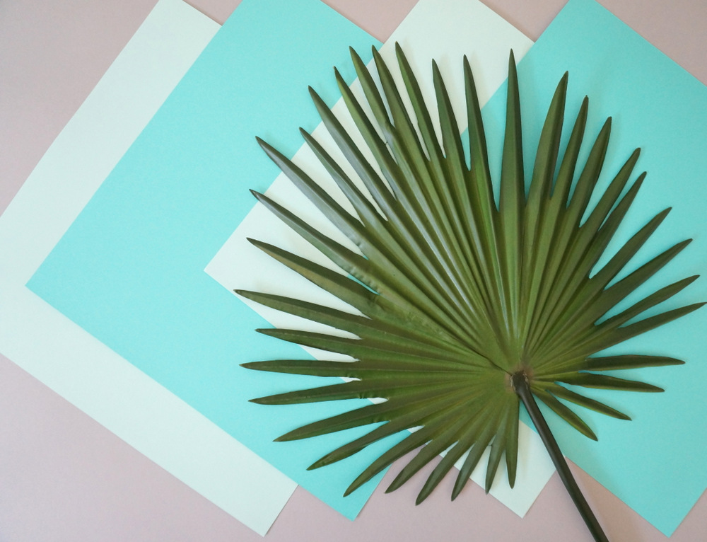 Palm and paper possibilities
