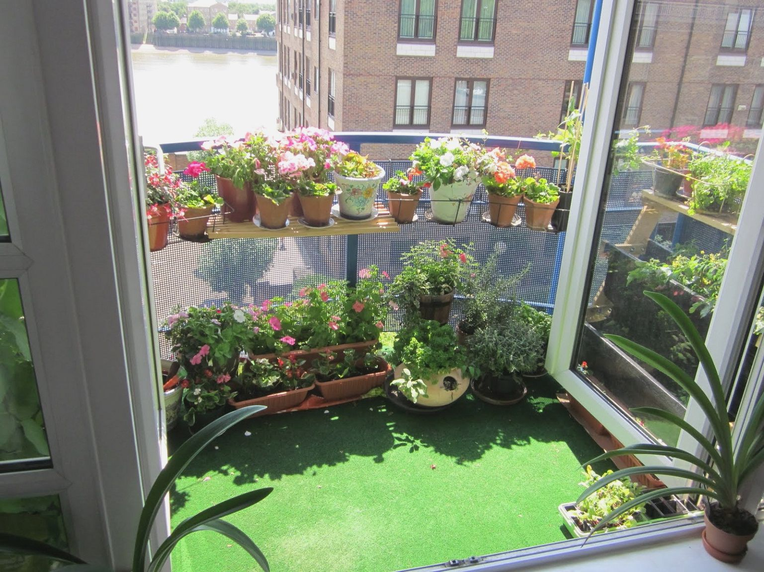 Urban green balcony garden with a green carpet