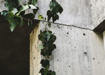 Hanging-plants-next-to-concrete-walls-create-an-Arcadian-setting-of-sorts-217x155