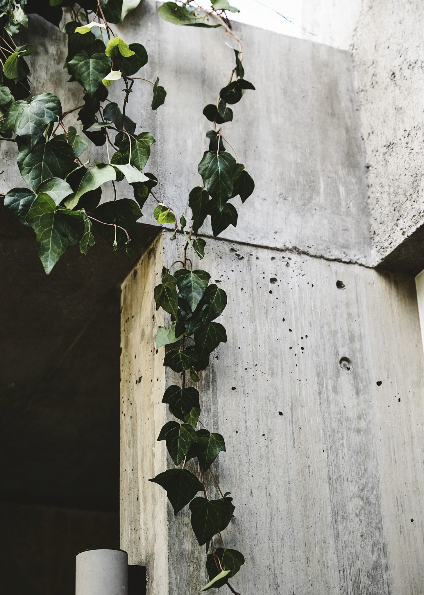 Hanging plants next to concrete walls create an Arcadian setting of sorts
