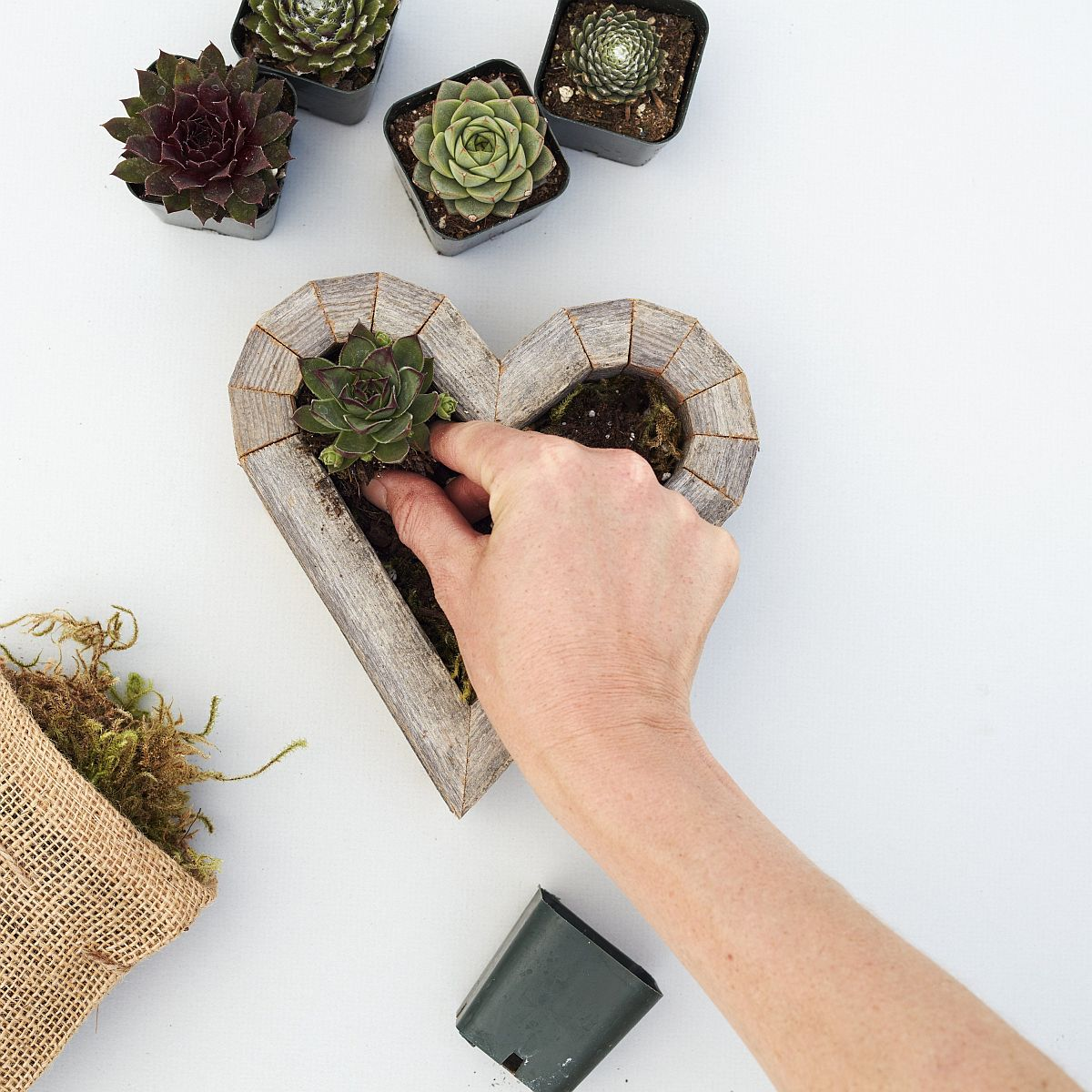 Redwood Heart Planter from Succulent Gardens