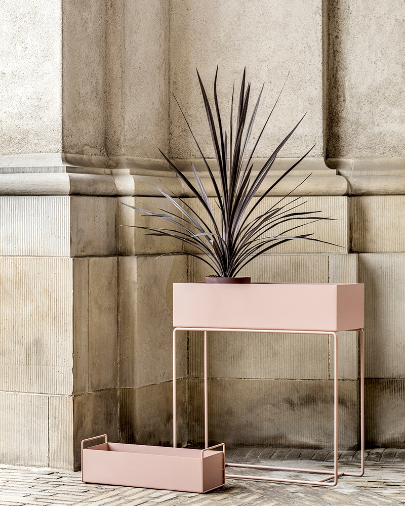 Rose plant box from ferm LIVING