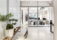 Curated-office-in-white-with-large-glass-patitions-and-indoor-greenery-217x155