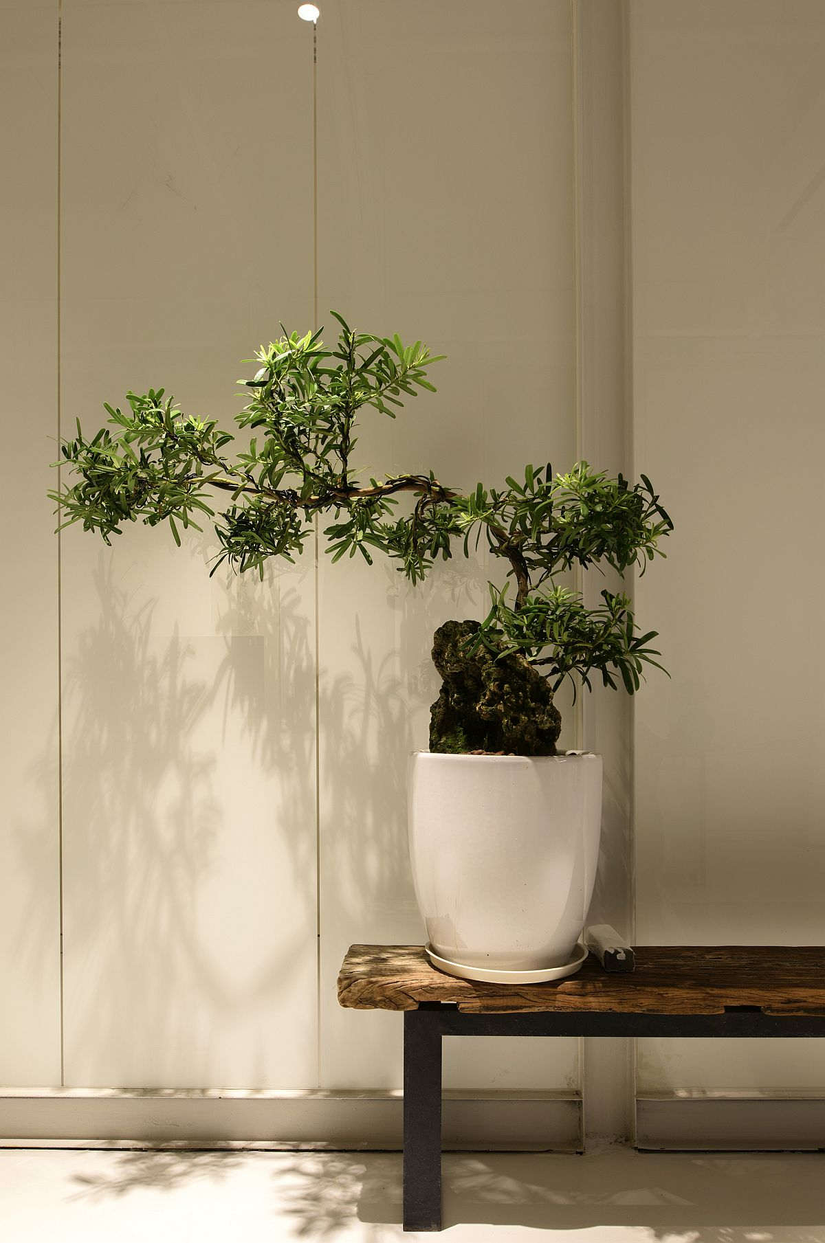 Indoor plant decorating idea for the modern office
