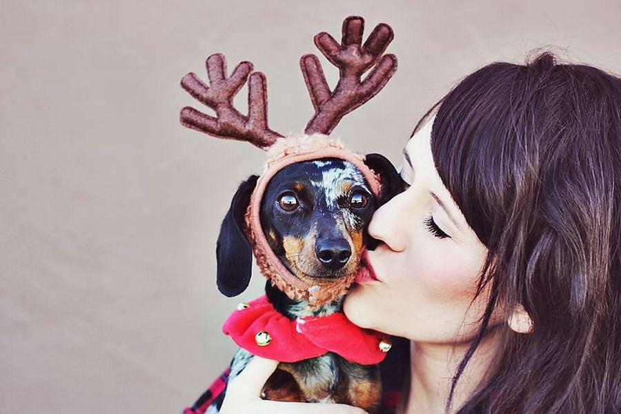 Dress up your pet as a reindeer