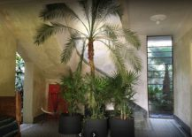 Tall-plants-inside-the-house-provide-freshness-and-cheerful-aura-217x155