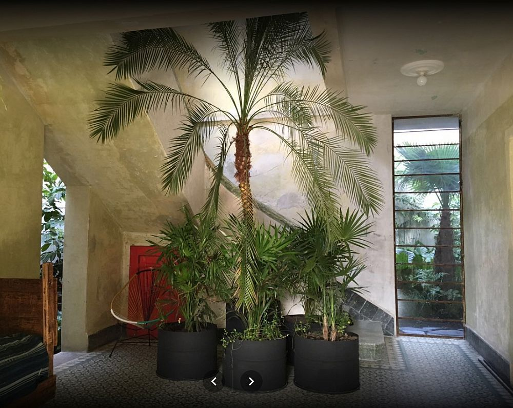 Tall plants inside the house provide freshness and cheerful aura
