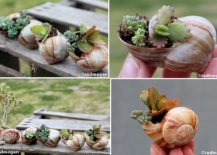 Shell-Potted-Succulents-for-a-unique-and-mini-garden-on-the-table-217x155