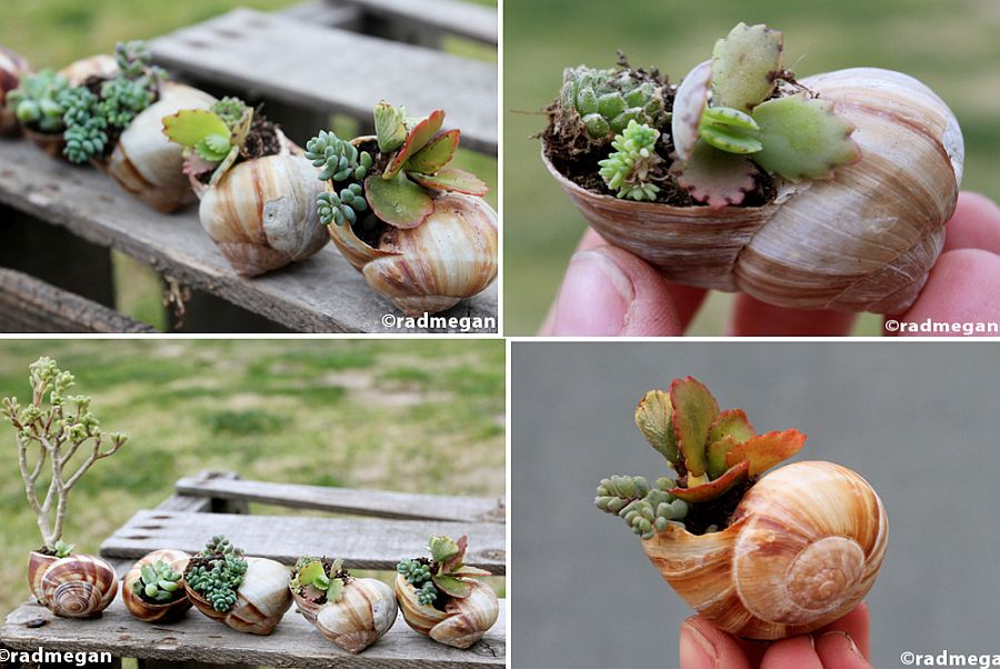 Shell-Potted-Succulents-for-a-unique-and-mini-garden-on-the-table
