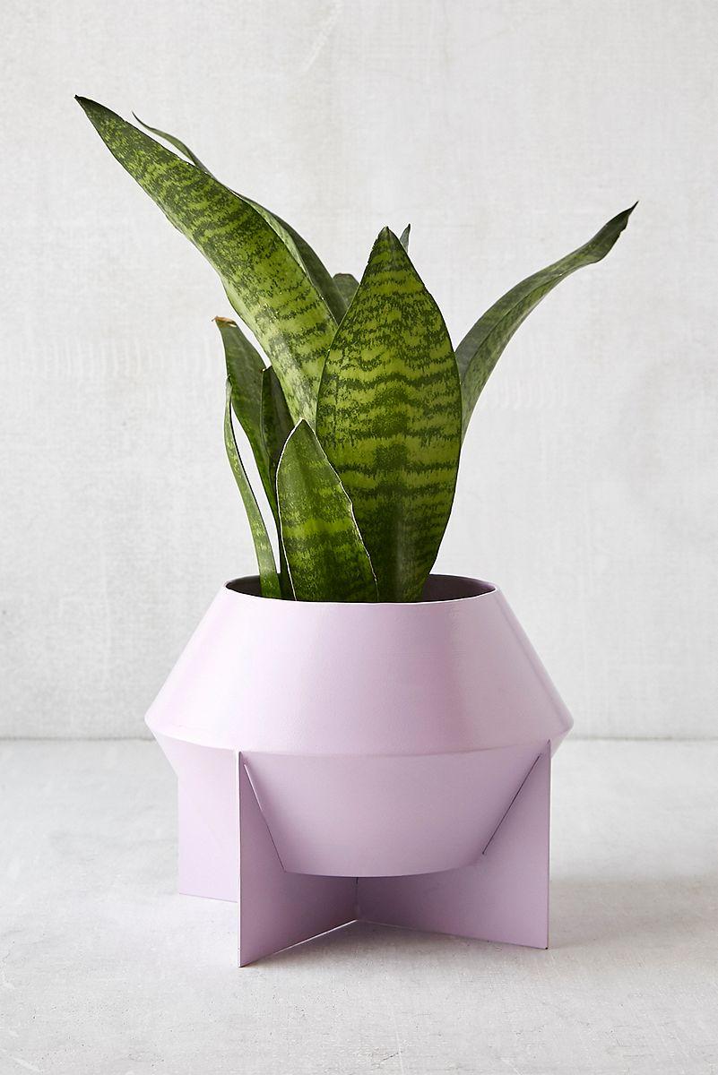 Modern lavender planter