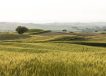 The-Tuscan-landscape-217x155