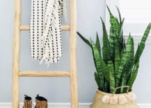 Belly-basket-filled-with-a-snake-plant-217x155