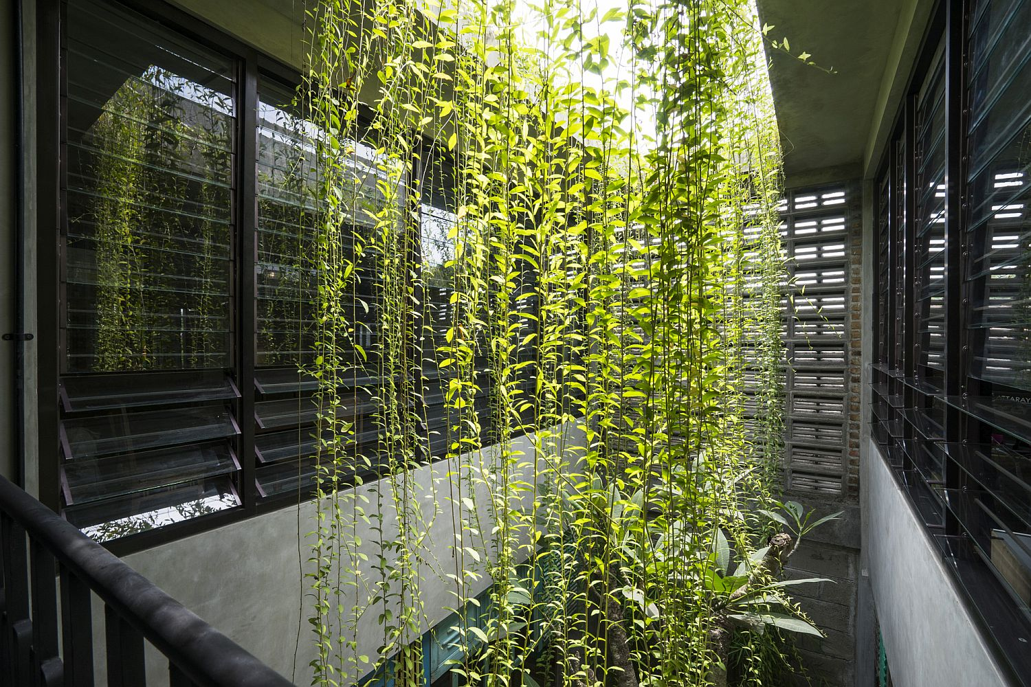 A ventilation well with plenty of greenery
