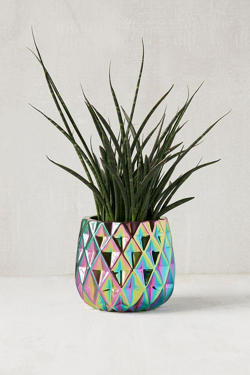 Rainbow-iridescent-planter