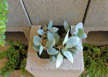 DIY-succulent-cinderblock-wall-217x155