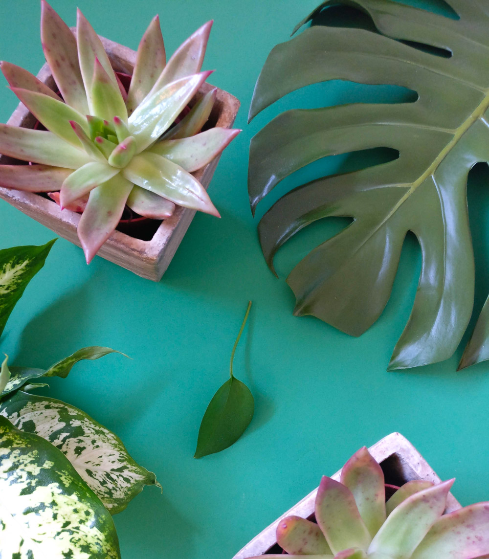 Let's Talk About Houseplants…