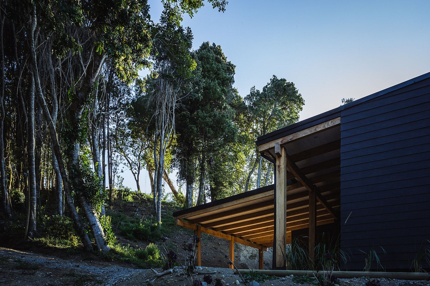 Beautiful forest around the home that sits on the banks of Lake Llanquihue