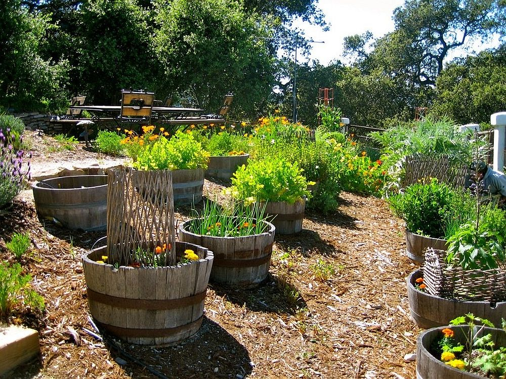 Elegant use of old wine barrels for planting in the small edible and flower garden