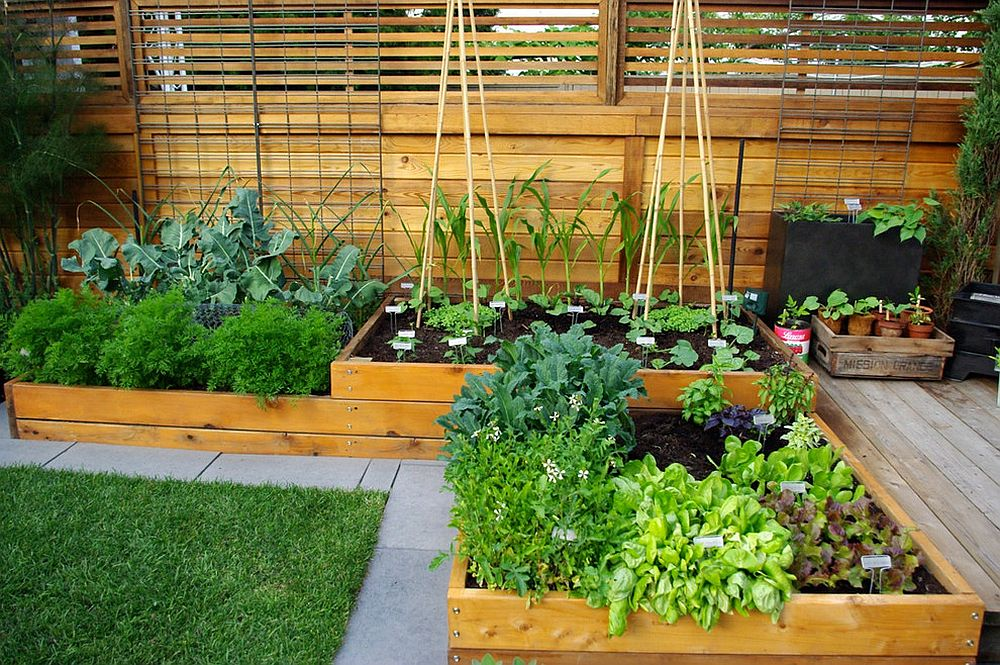 Even a small contemporary garden can accomodate a beautiful edible garden