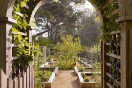 Organic and Healthy: Giving Your Home the Edible Garden Advantage