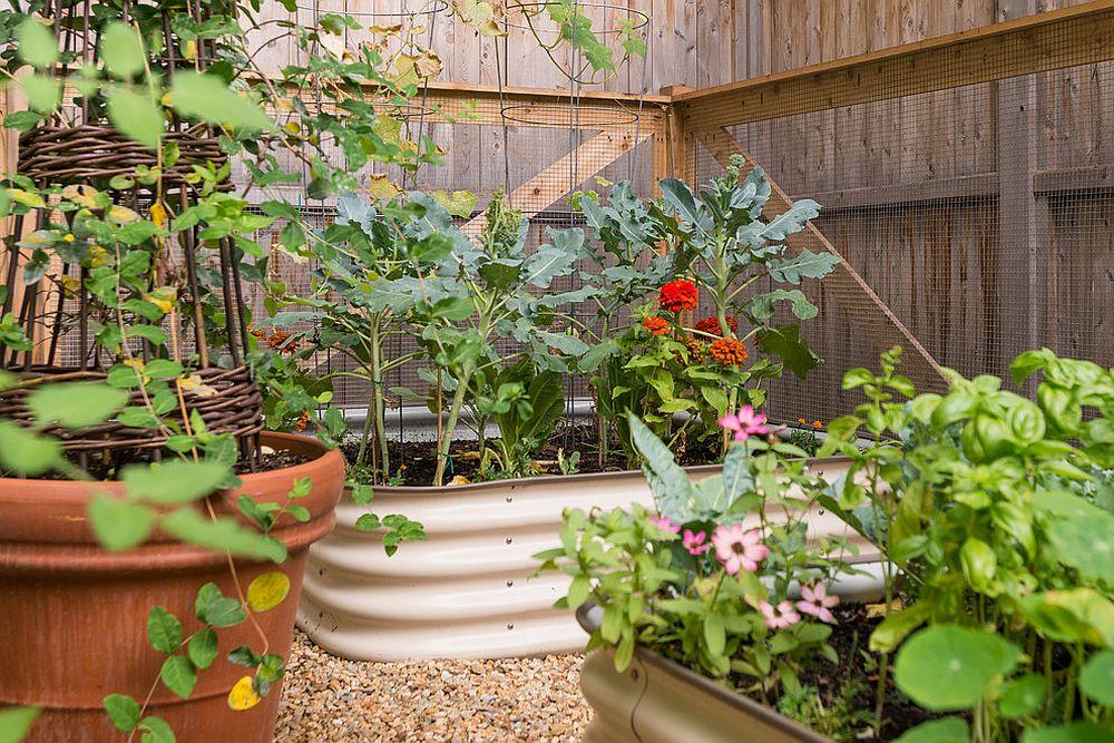 Best Edible Garden Ideas for an Organic, Healthy Lifestyle