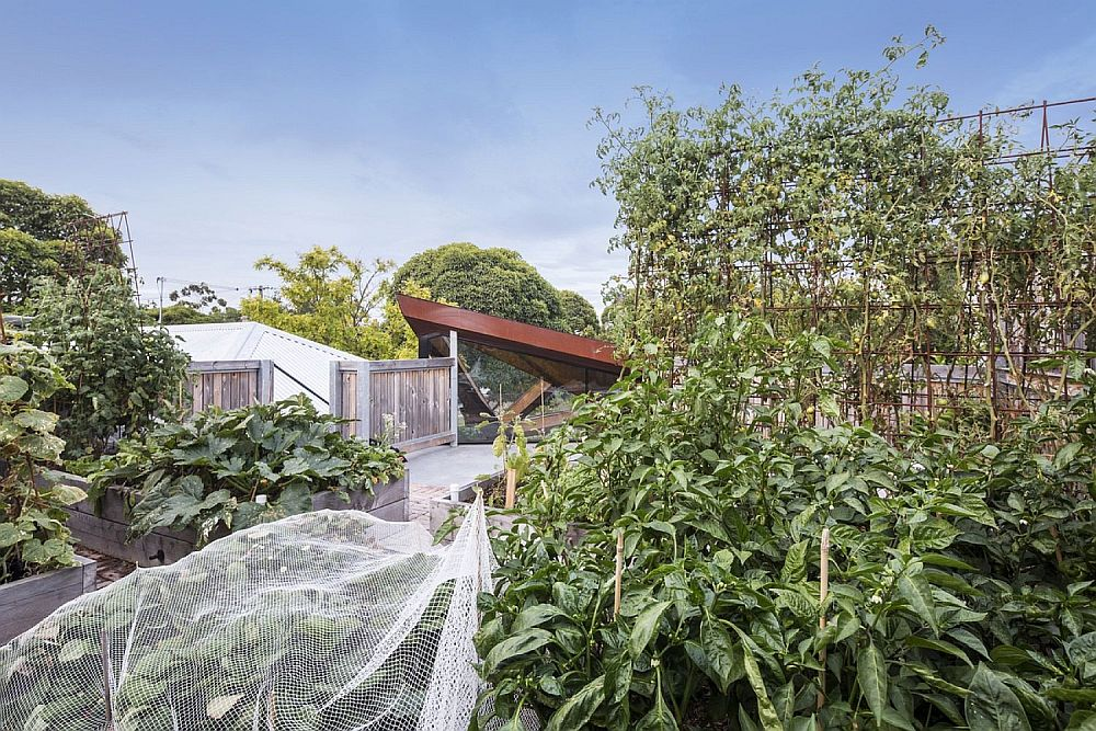 Rooftop edible garden of a contemporary Melbourne Residence