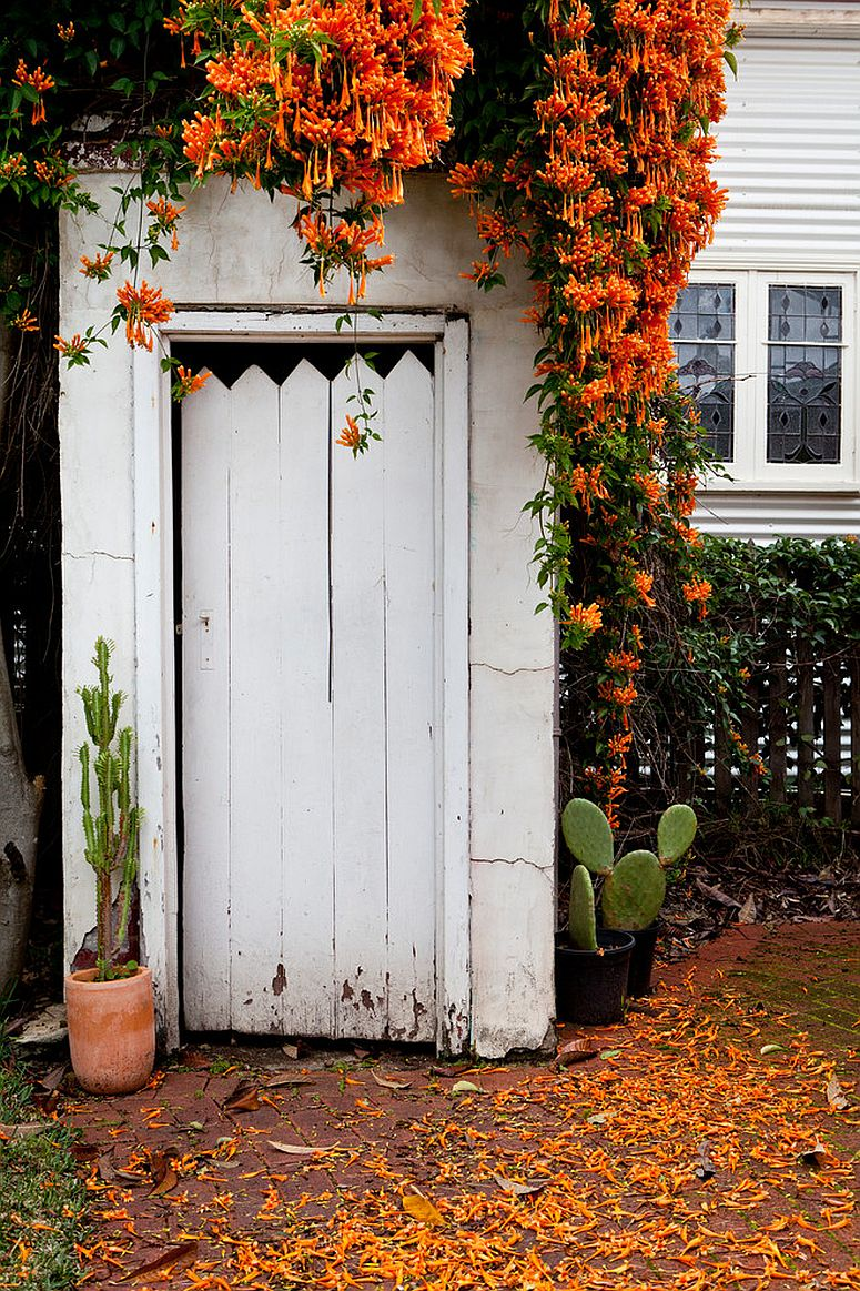 Let nature add orange to your home this fall