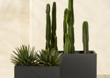 Modern-planters-from-CB2-217x155