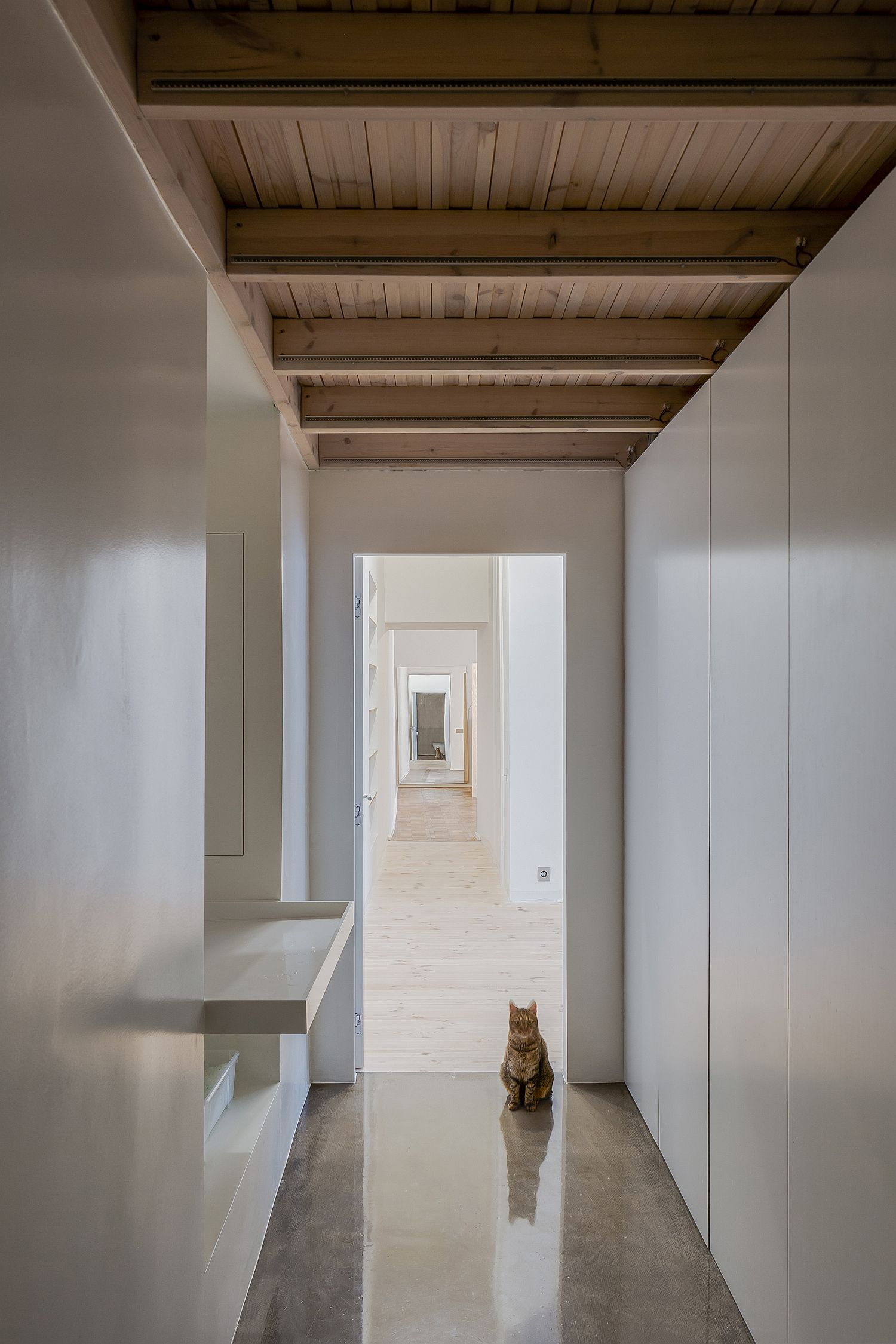 White hallways inside the apartment along with a touch of woodsy warmth