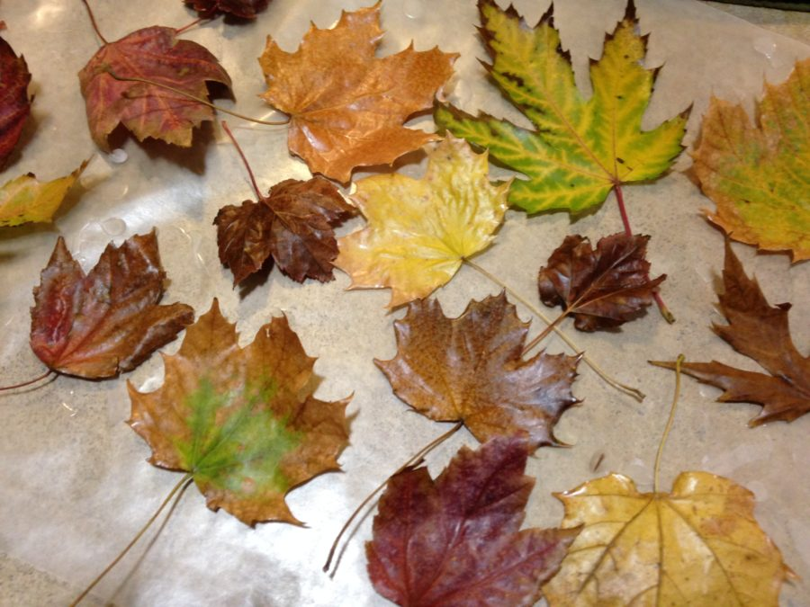 DIY waxed fall leaves montage idea