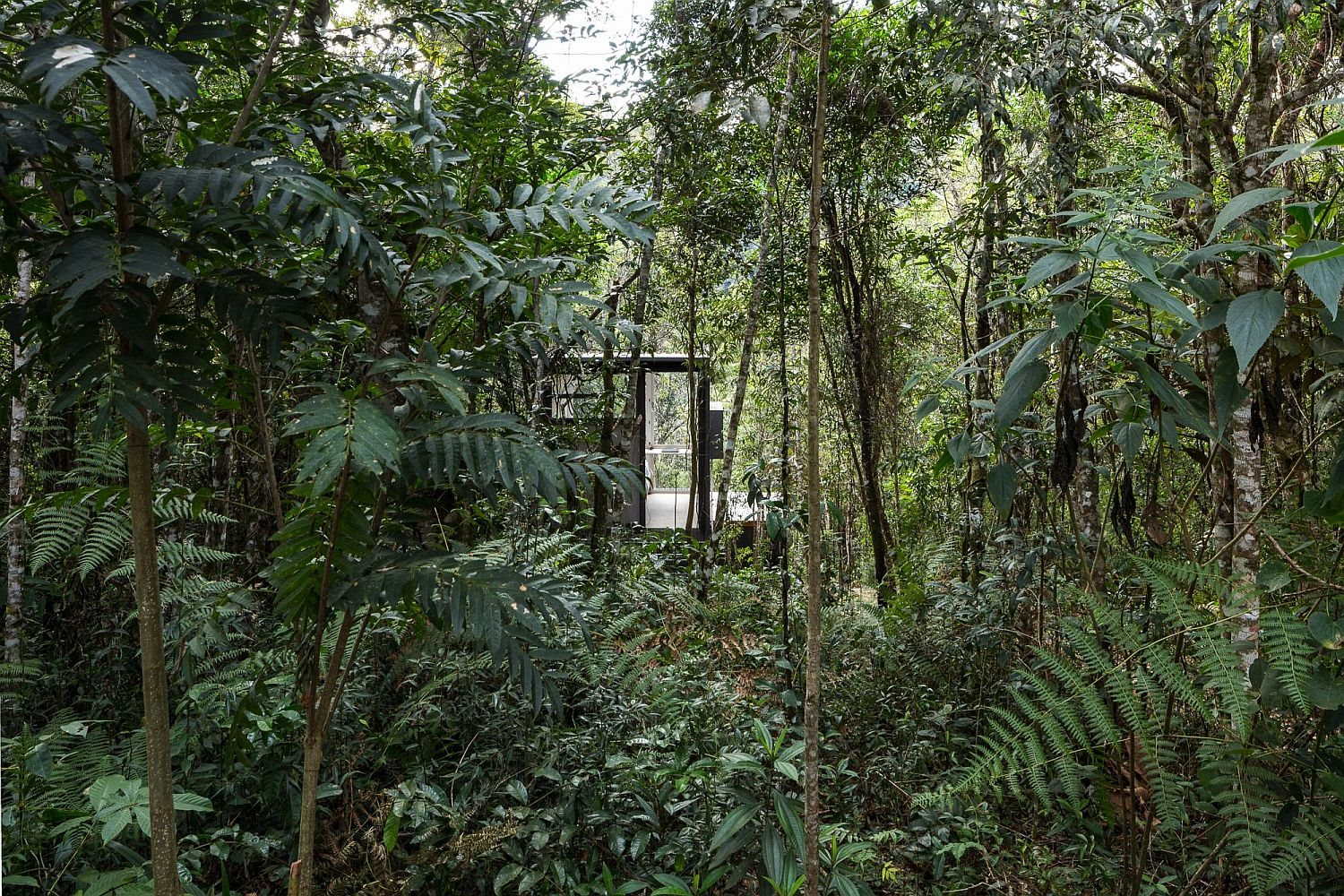 Natural canopy hides the cabin ever so beautifully