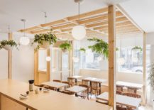 Hanging-plants-add-greenery-to-the-cafe-interior-217x155