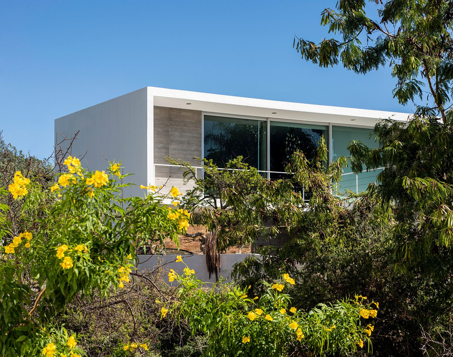 Natural canopy offers a screen of privacy for the house