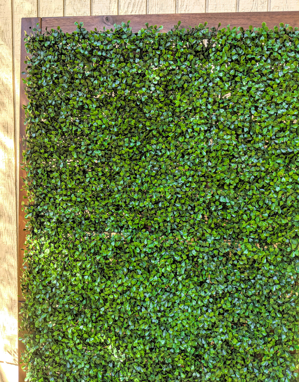 Faux-boxwood-is-a-great-solution-for-instant-greenery