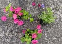 Spring-gardening-selections-217x155