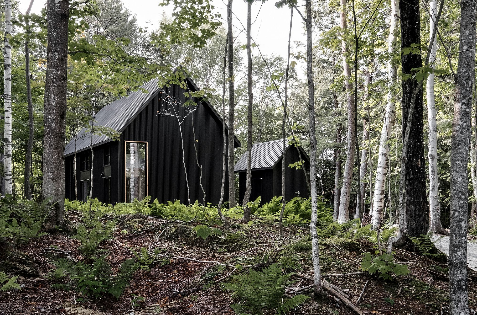 Gorgeous dark exterior of the Canadian cabin in forest