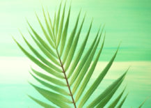 Palm-fronds-are-the-epitome-of-summer-style-217x155